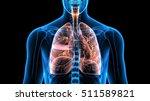 Human Body Organs  Lungs .3d