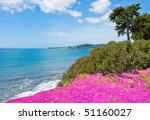 Purple Ice Plant Blooming On A...