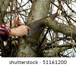 Pruning Old Branches From The...