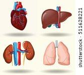 human organs set  kidneys and... | Shutterstock .eps vector #511628221
