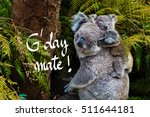 australian koala bear native... | Shutterstock . vector #511644181