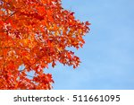 Fall Foliage Red Maple Tree...