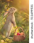 easter bunny with a basket of... | Shutterstock . vector #511699531