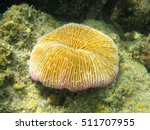 Selective Focus On Polyp Of...