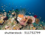 coral | Shutterstock . vector #511752799