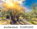 the gethsemane olive orchard ... | Shutterstock . vector #511852345