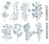 herbs wild flowers botanical...   Shutterstock . vector #511868557