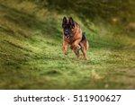 running german shepherd | Shutterstock . vector #511900627
