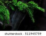 Green Coniferous Tree Pine...
