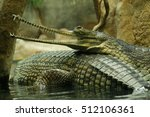 A couple of gharials   indian...