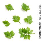 celery or parsley leaf isolated ... | Shutterstock . vector #512161651