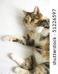 happy cat lying on back | Shutterstock . vector #51226597
