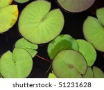 Green Water Lily Pads