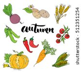autumn season set. hand drawn... | Shutterstock . vector #512351254