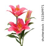 Stock photo beautiful red lily flower bouquet isolated on white background 512369971