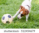 Dog Playing With Football ...