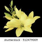 lilies light yellow flowers  ... | Shutterstock . vector #512479009