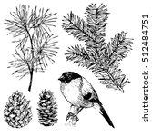 hand drawn fir  pine branches  ... | Shutterstock . vector #512484751