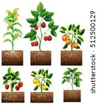 Different Kinds Of Plant In...