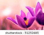 abstract flower background | Shutterstock . vector #51252685