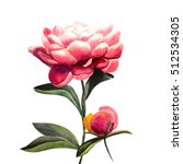 Pink Flower Peony. Peony And...
