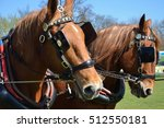 pair of suffolk punches