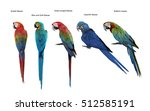 set of macaw bird isolate on... | Shutterstock . vector #512585191