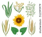 cereals set. sunflower  barley  ... | Shutterstock .eps vector #512595979