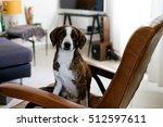lovely dog left alone ready for ... | Shutterstock . vector #512597611