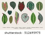 set leaves. exotics. vintage... | Shutterstock .eps vector #512695975