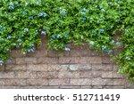 Plumbaginaceae Flowers On A...