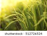 Rice Farm  Rice Field  Rice...