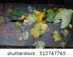 Wet Fallen Leaves Of Trees On ...