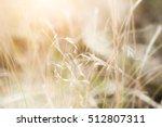 wild grasses in a field.... | Shutterstock . vector #512807311