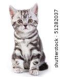 Stock photo british kitten on white background 51282037