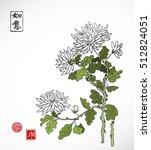 chrysanthemum flowers in... | Shutterstock .eps vector #512824051