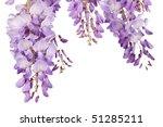 Beautiful Wisteria Flowers...