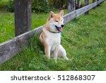 the shiba dog is sitting near... | Shutterstock . vector #512868307