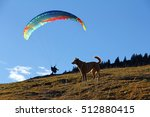 Small photo of The dog and the paraglider airman. Paraglider airman with dog in the mountains