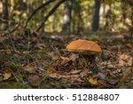 edible mushroom brown cap... | Shutterstock . vector #512884807