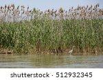 landscape in danube delta ... | Shutterstock . vector #512932345