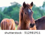 Stock photo horse horses on the farm on a sunny day 512981911