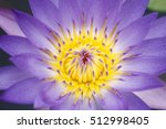 Purple Lotus In Pond Fish...