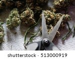 trimming legal recreational...   Shutterstock . vector #513000919