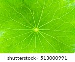 Close Up Detail Green Leaf Of...