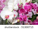 Many Orchid Flowers In A Row