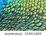 colorful peacock feathers for... | Shutterstock . vector #513011839