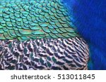 colorful peacock feathers for... | Shutterstock . vector #513011845