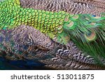 colorful peacock feathers for... | Shutterstock . vector #513011875