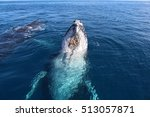 humpback whales | Shutterstock . vector #513057871